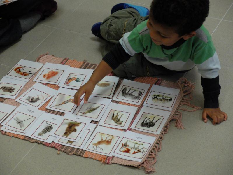 Montessori Gaillac France